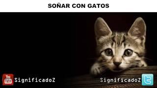 Significado de Soñar con Gatos ✔ ¿Que Significa? 🐱