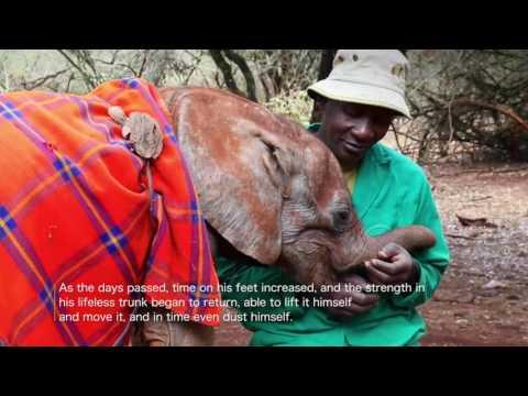 Musiara's Rescue