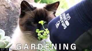 Siamese Cat Gardener