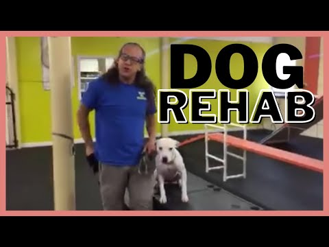 Fear/anxious/nervous/aggressive dog rehab strategy