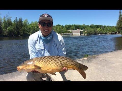 Carp Fishing River Dams Peterborough, Kawartha, Ontario