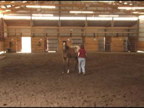Horse Training Clinic with Gentle Horse Trainer Missy Wryn