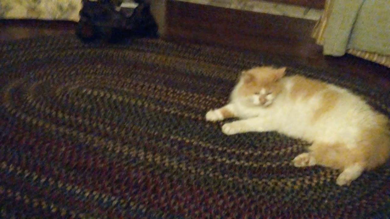 Lucy cat foot fetish | Adult pics)