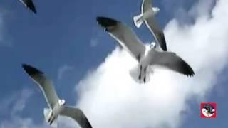 Đàn Chim Tha Phương- Ca Sĩ Hải Ngoại- TTMD- V1