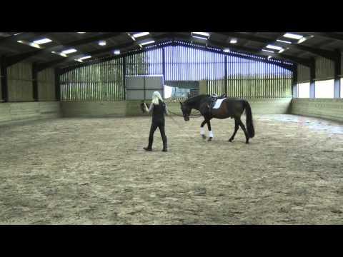 Jenny Rolfe  Working on the Lunge  HorseandRider UK