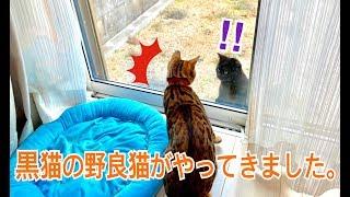 言えの庭に黒猫の野良猫が来るようになり、ベルとテトは興味津々です。