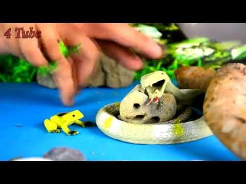 Лягушки и Змея. Пауки. На помощь!!! Животные для детей. Игрушки видео. Театр для детей