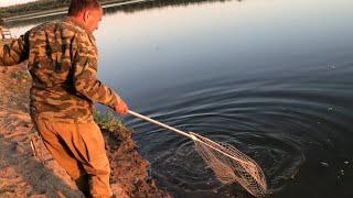 Первая сентябрьская рыбалка на сазана на Ахтубе (на закидушки на макуху)