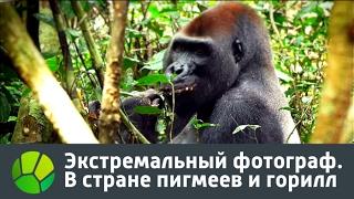 Экстремальный фотограф  В стране пигмеев и горилл | Живая Планета