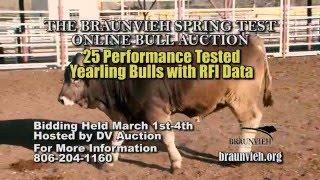 Braunvieh Spring Test Online Bull Auction - braunvieh.org