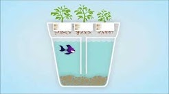 SELF-CLEANING FISH TANK HERB GARDEN