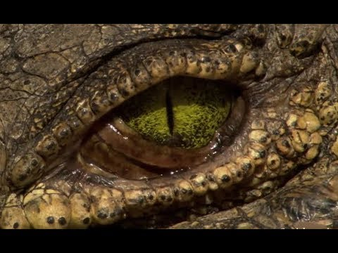 The Secrets Of The Crocodiles | Full Documentary - Classic D