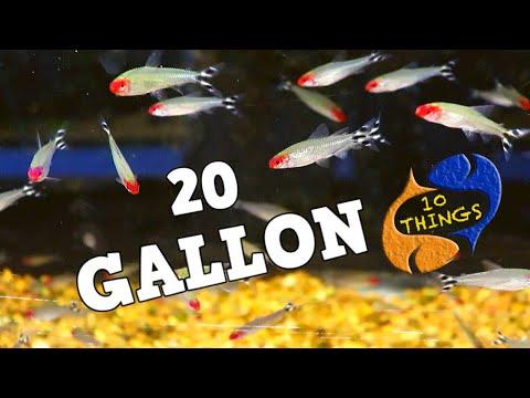 20 Gallon Aquarium Fish Ideas