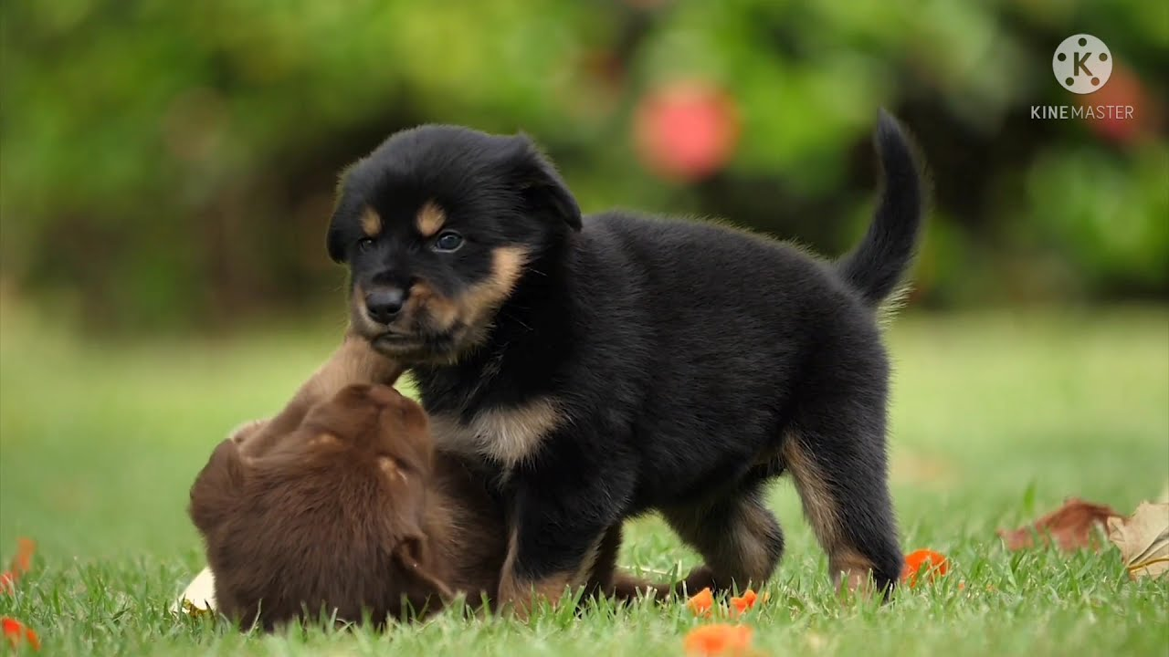 || Cute Dogs || || Puppy Road Running || || Dog Fetching Park Play || || Dog  Pet Animal Small ||