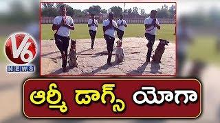 Army Dogs Perform Yoga Asanas In World Yoga Day Celebrations |…