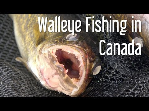 23. Fishing For Walleye And Bass Lake Of The Woods Ontario Canada The Boat Life Daily Vlog