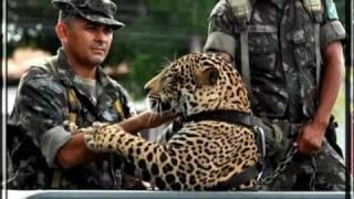 Baixar Canção da Infantaria - Brasil