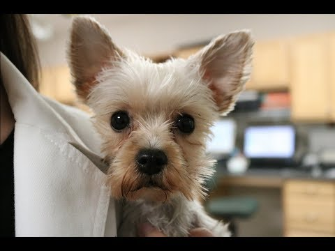 Truth About Working In Veterinary Medicine | Veterinary Vlog#7