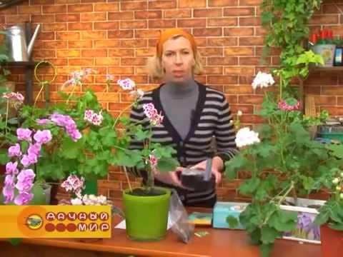 Cистема автополива комнатных растений olGGol