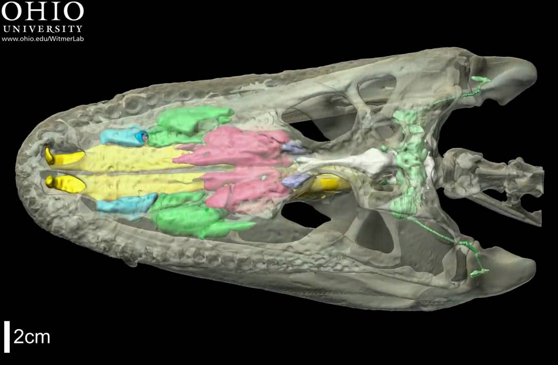 medium resolution of alligator body part diagram labeled