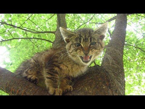 The kitten was hiding on the tree