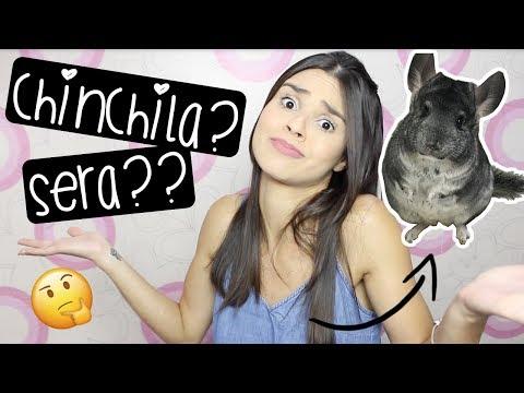 CHINCHILA É O BICHINHO CERTO PRA VOCÊ?  by Carla Soares