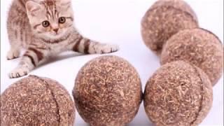 Почему коты любят валерьянку  Приколы с кошками  Факты о кошках