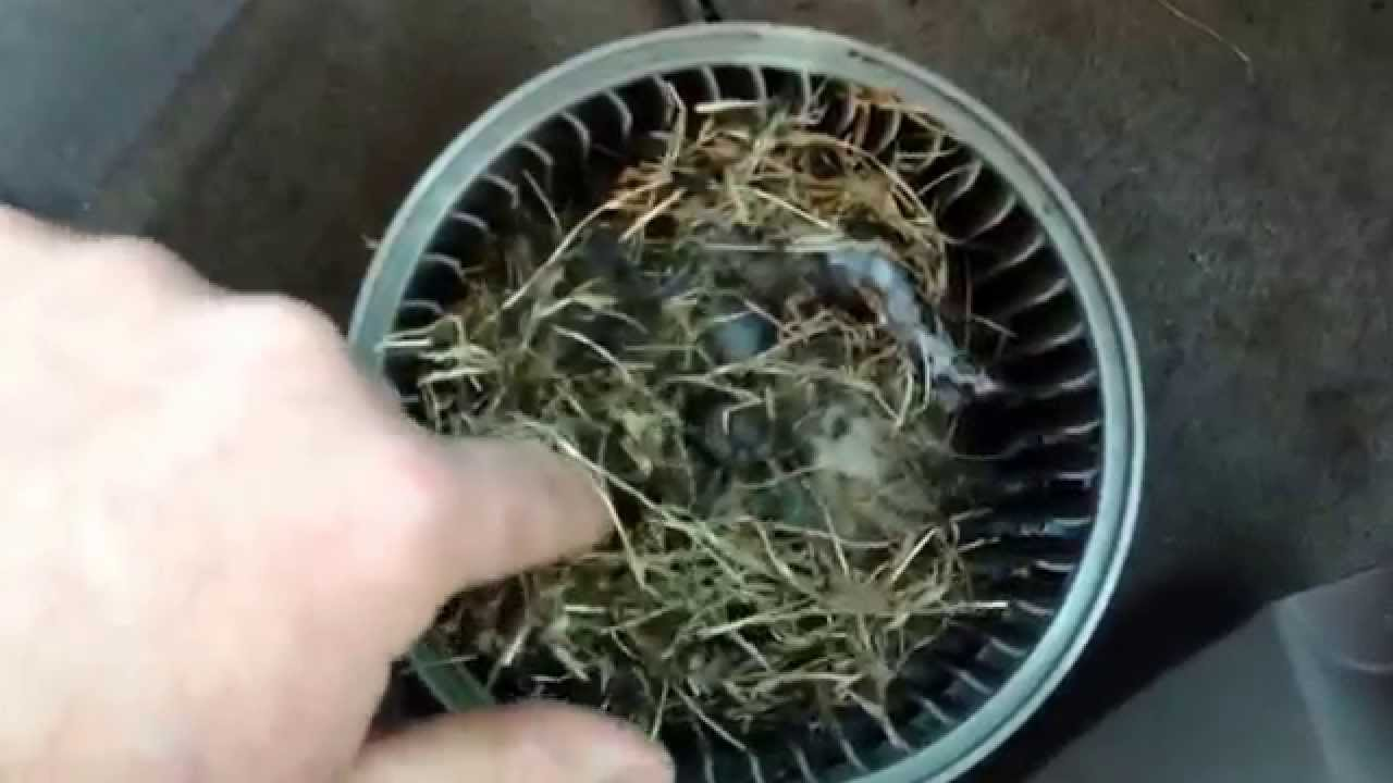 Quot Bad Smell From Heater Quot Mouse Nest In Toyota Camry Youtube