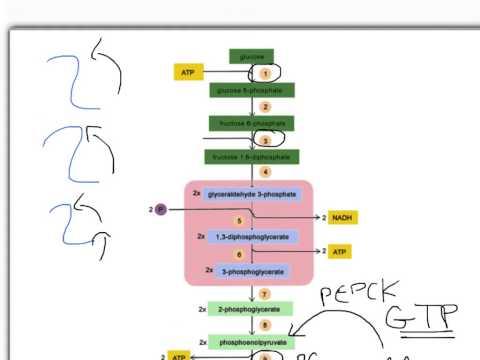 Pre-lecture Diabetic Ketoacidosis