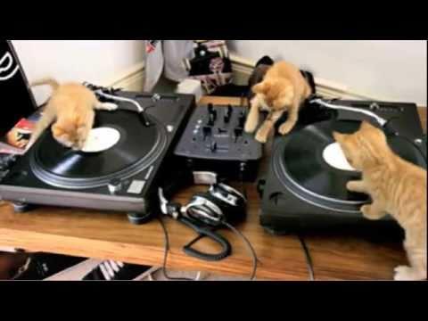 DJ Kittens Scratching away on Decks