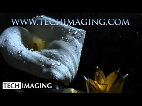 High Speed Camera Video - Rain on a flower