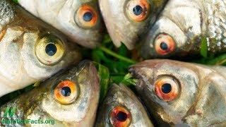 Je rybí olej podvod?