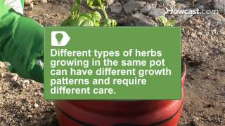 How to Grow a One-Pot Indoor Herb Garden