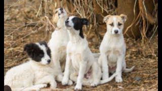 Мужчина увидел 4 псов, которые охраняли одеяло. Подойдя ближе, он ахнул от удивления