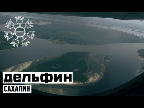 Дельфин - Сахалин  / Dolphin - Sakhalin