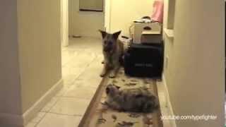 Вам не пройти, кошки не пускают собак You Shall Not Pass, Dog