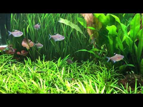 Juwel rio 450 LED planted tank.