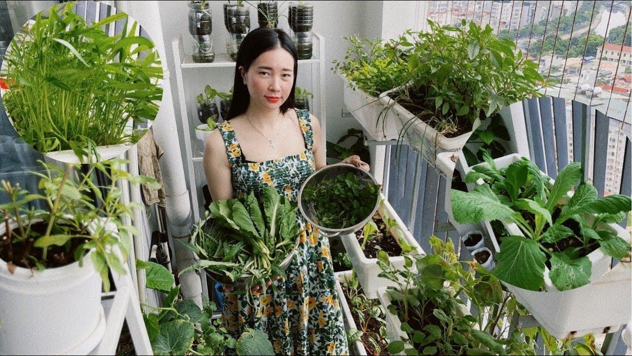 #116 Thu hoạch rau muống,cải mơ,húng quế,bạc hà/chia sẻ bí quyết làm vườn cho người mới| garden tour