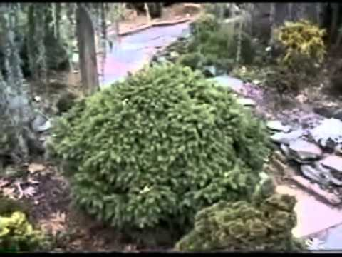 A Visit To Ed Rezik's Garden