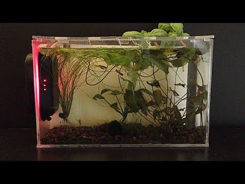 Feeding Fish With Algae