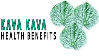 Top 10 Beauty and Health Benefits of Kava Kava