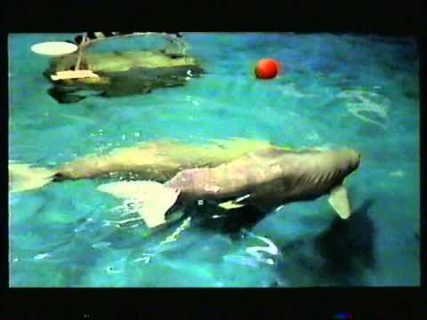 Anti whale and dolphin captivity documentary, (better audio quality version)