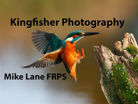 Kingfisher Photography