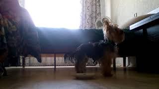 Как ведёт себя моя собака одна дома!!!!
