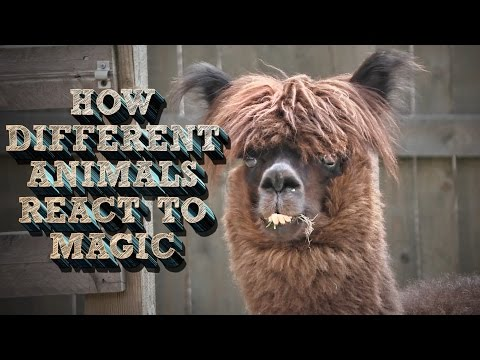 How Different Animals React to Magic?