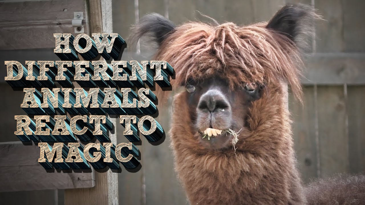 How Different Animals React to Magic? - YouTube