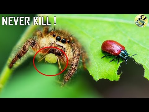 NEVER KILL THESE INSECTS | Beneficial Insects for Garden - ORGANIC BIOCONTROL