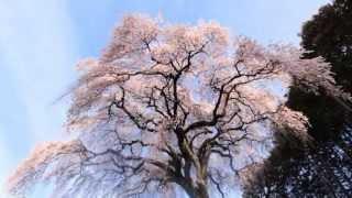 2014年春, Spring of Japan in 2014