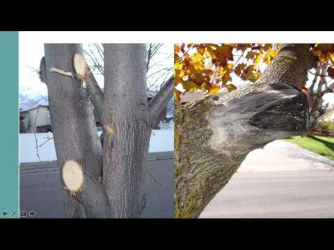 How to Prune Landscape Trees and Shrubs