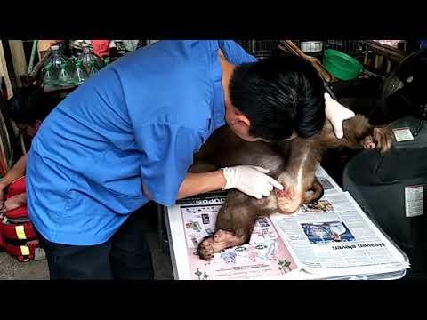 Jk under checking from wildlife vet
